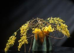 Bloemen-Planten-FotografieBloemen-Planten-FotografieBloemen-Planten-Fotografie