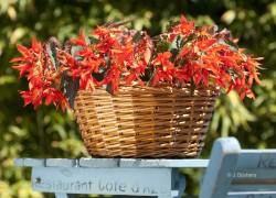 PBloemen-Planten-Fotografie