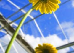 Bloemen-Planten-FotografieBloemen-Planten-Fotografie