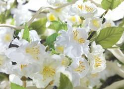 Zijdebloemen gefotografeerd door Joop Gijsbers Bloemen en Planten Fotograaf