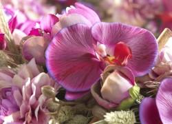 Phalaenopsis Zijdebloem gefotografeerd door Joop Gijsbers Bloemen en Planten Fotograaf
