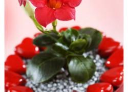 Valentijn Arrangement gefotografeerd door Joop Gijsbers Fotografie Aalsmeer